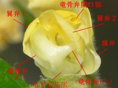 Ha01azukihanaa080814023504