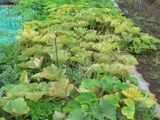 Ha0211072108040702syukakuowari01_3