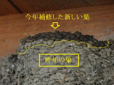 Ha15a12041511020404tsubamesuzukuri0