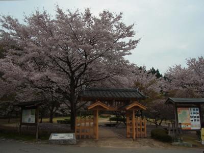 Ha110a20160413155211yokokawasakura2