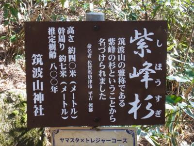 Ta400tsukubasansugi800yrimg0033_201