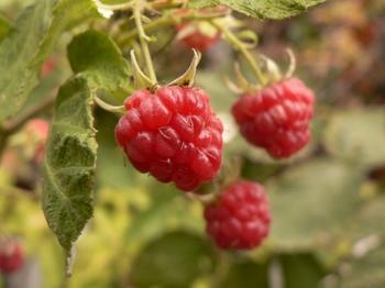 ha05a-10-051021-raspberry