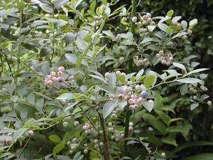 hana-00-050801-b-berry-0005