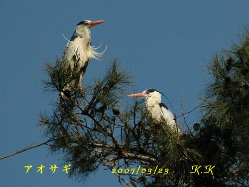 To_aosagi_01s00200703231