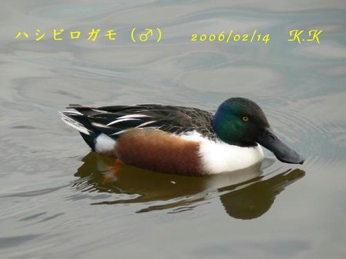 To_hasibirogamo01s00100602141