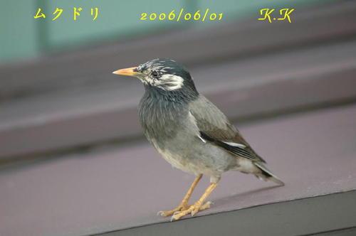 To_mukudori01aa00100606011