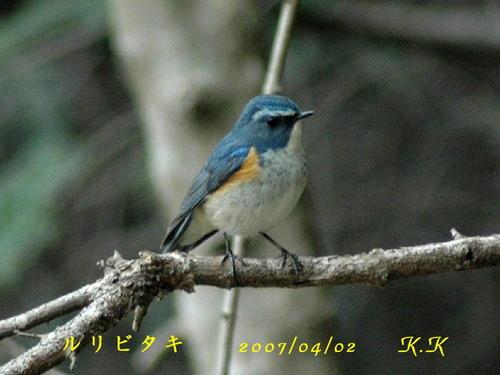 To_ruribitaki_takasaki_01aa01100704021