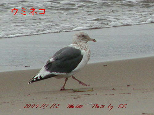 To_uminekohakodate04111202