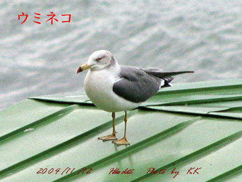 To_uminekohakodate04111203