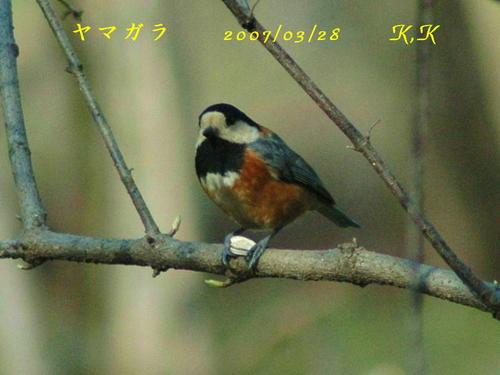 To_yamagara__01a200200703281